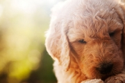 Babies-and-Pets-004