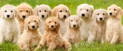 Babies-and-Pets-026