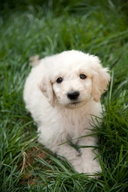 Babies-and-Pets-027